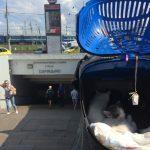 Katzenerwerb anders - кот купить в противном случае