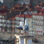 portugal-porto-gaia-view-douro-reisefreiheit-eu