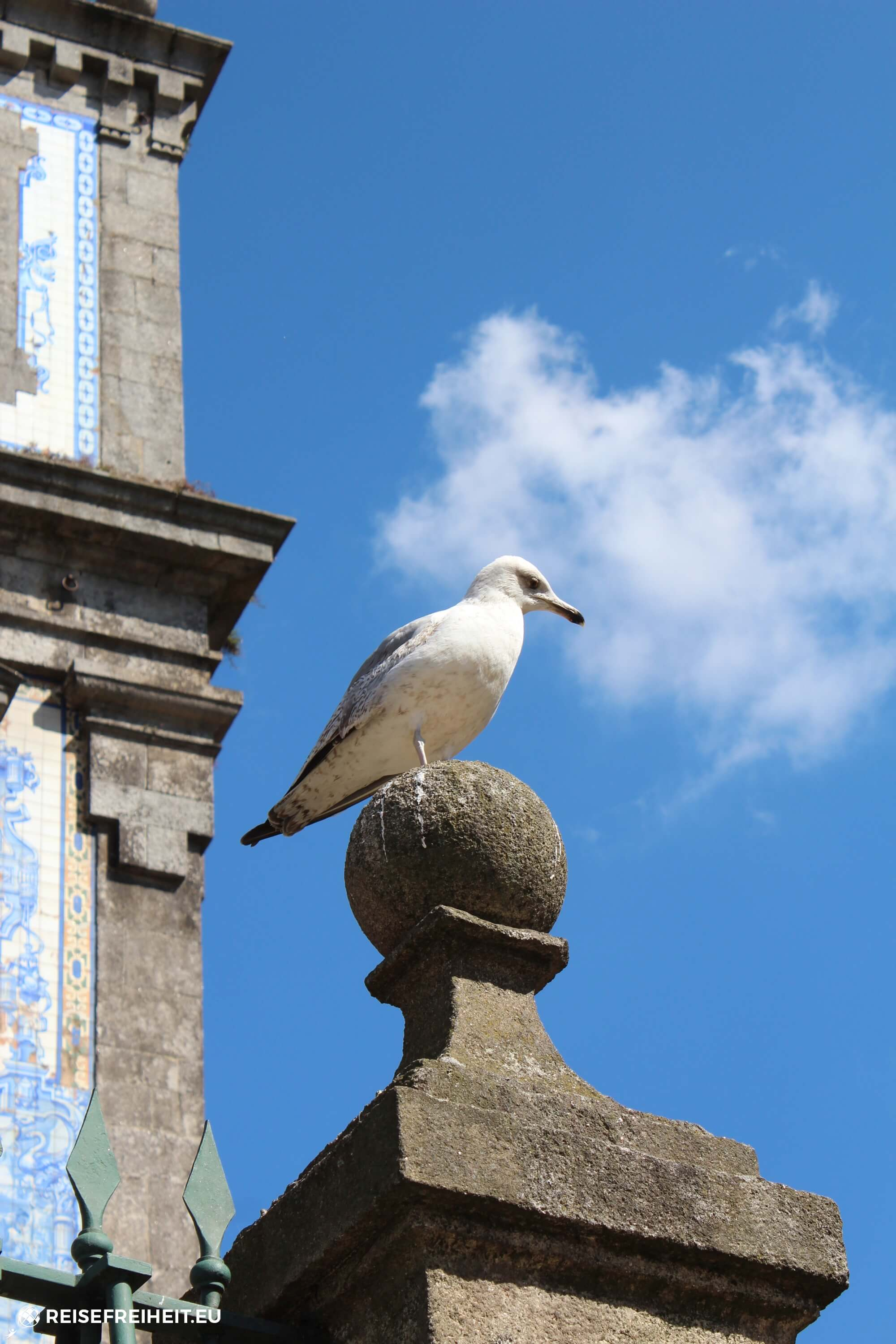 portugal-porto-Church-of-Saint-Ildefonso-bird-reisefreiheit
