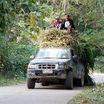 trekking-chiang-mai-nordthailand